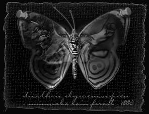 frustfly